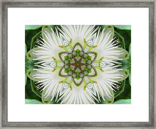 Passion Flower Mandala Framed Print