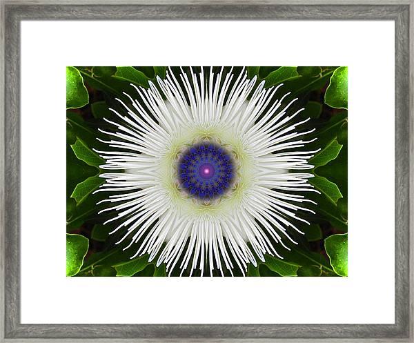 Passion Flower Portal Mandala Framed Print