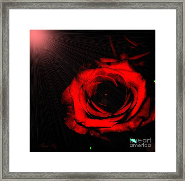 Passion. Red Rose Framed Print