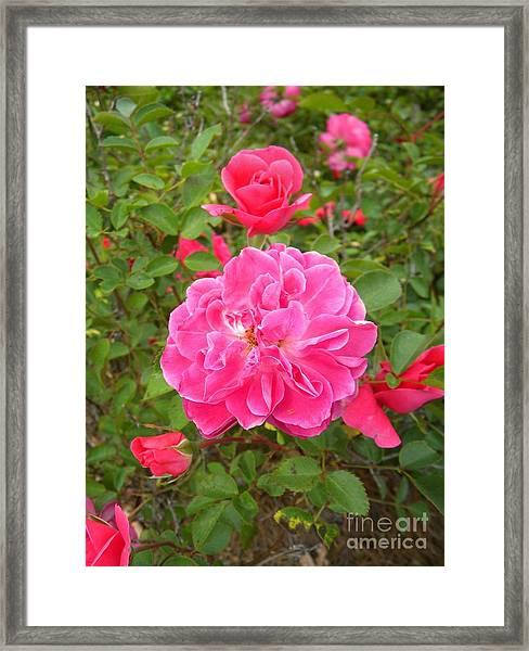 Passionate Pink Springtime Framed Print