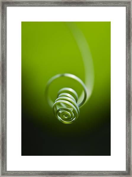Passionflower Tendril Framed Print