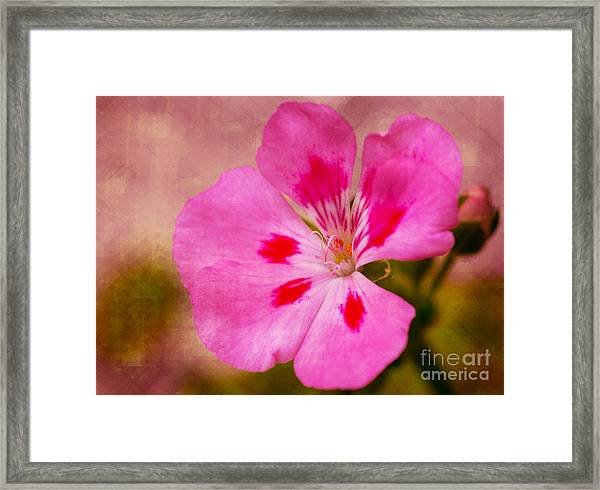 Pastel Beauty Framed Print