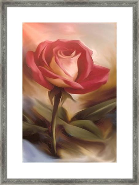 Pastel Light Red Rose Framed Print