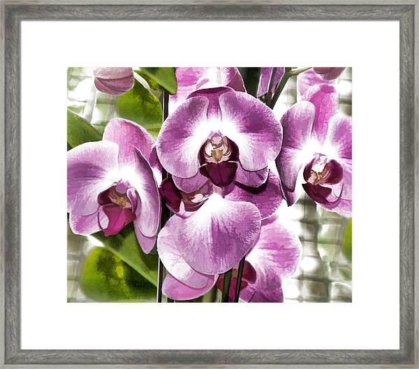 Pastel Orchids Framed Print