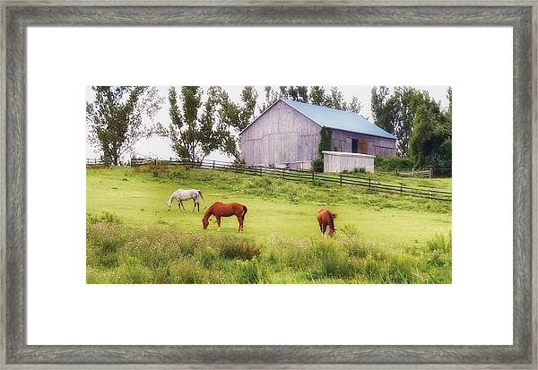 Framed Print featuring the photograph Pasture by Garvin Hunter