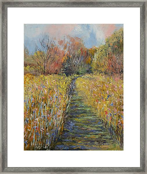 Path In The Meadow Framed Print