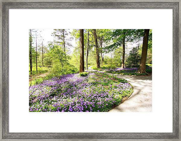 Path Of Serenity Framed Print