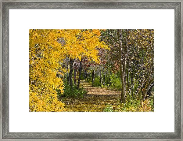 Path Through Autumn Trees Framed Print