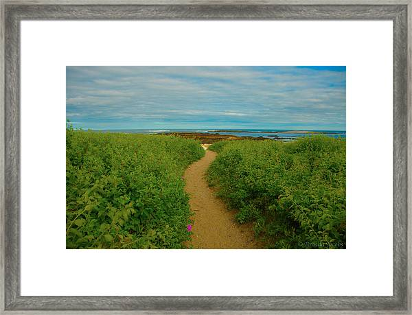 Path To Blue Framed Print