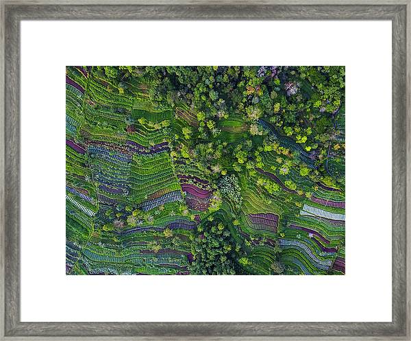 Pattern Framed Print
