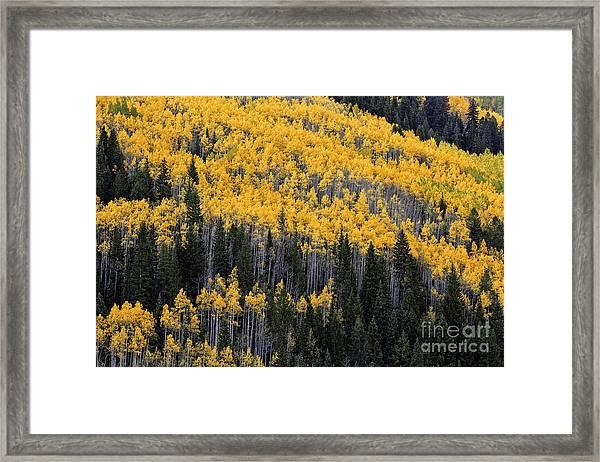 Pattern Of Autumn Framed Print