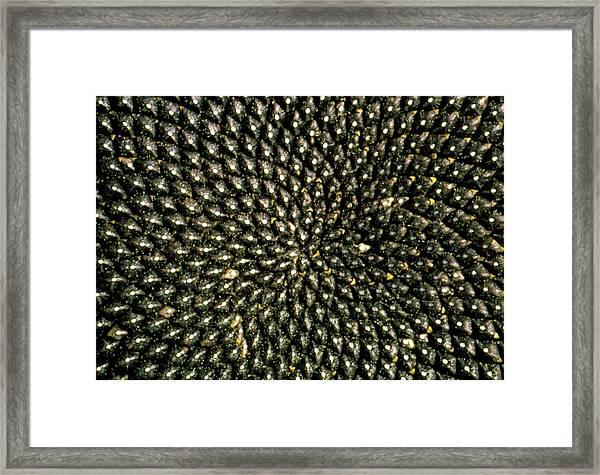 Pattern Of Seedhead Of Sunflower Framed Print