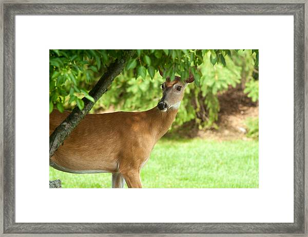 Paying Attention Framed Print