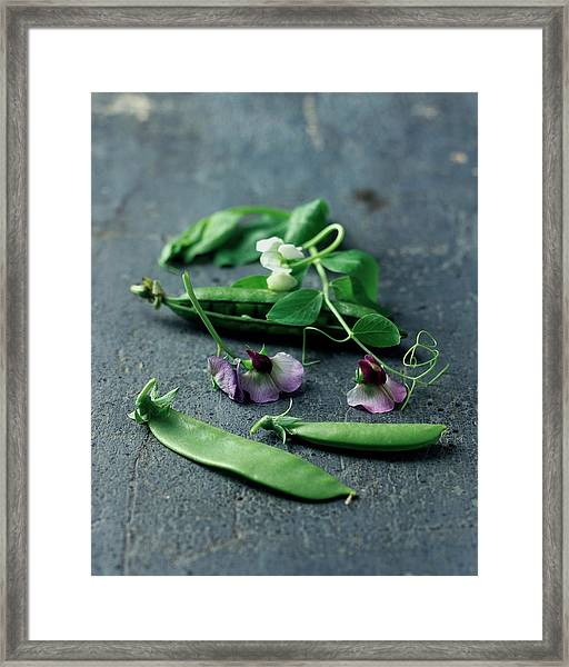 Pea Pods And Flowers Framed Print