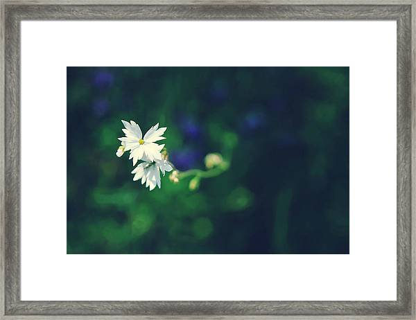 Peace For Annie Framed Print