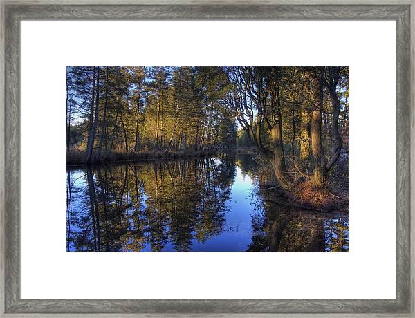 Peaceful Cedar Framed Print