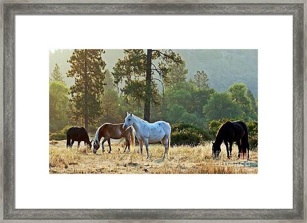 Peaceful Dawn Framed Print