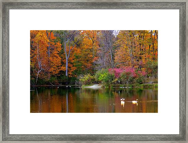 Peaceful Lake Framed Print