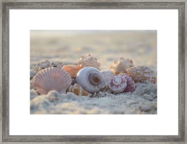 Peaceful Whispers Framed Print