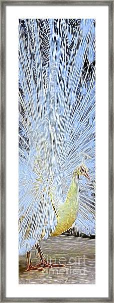 Peacock Transformation Framed Print