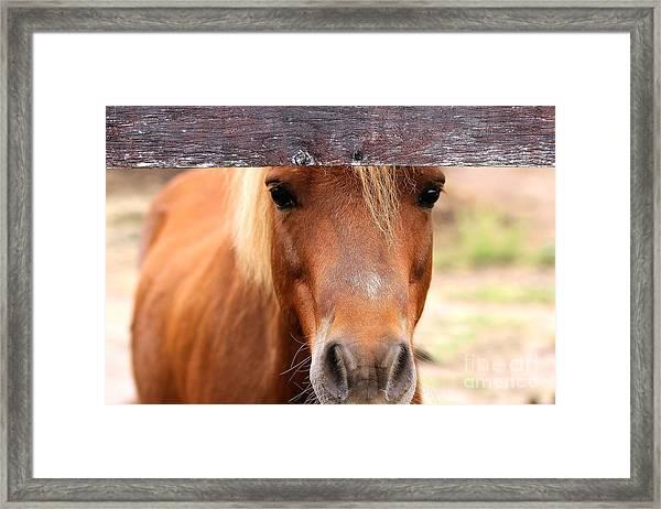 Peaking Pony Framed Print