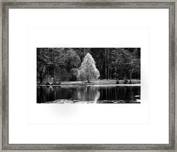 Pear Tree Framed Print by Jerry Cook