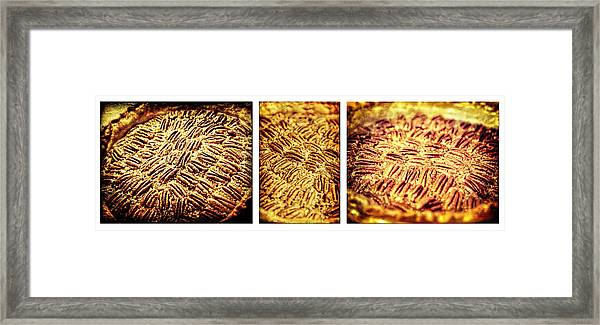 Pecan Pie Nostalgia Triptych By Lincoln Rogers Framed Print