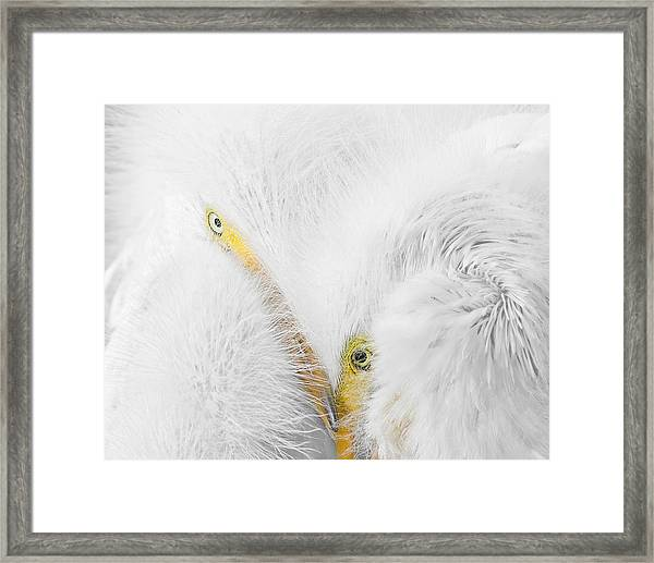 Peering Thru Feathers Framed Print