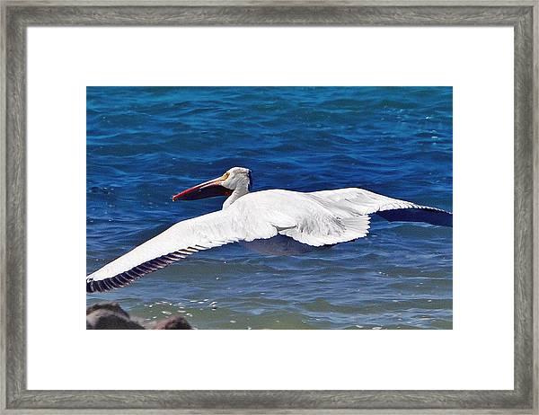 Pelican At Pyramid Lake Framed Print