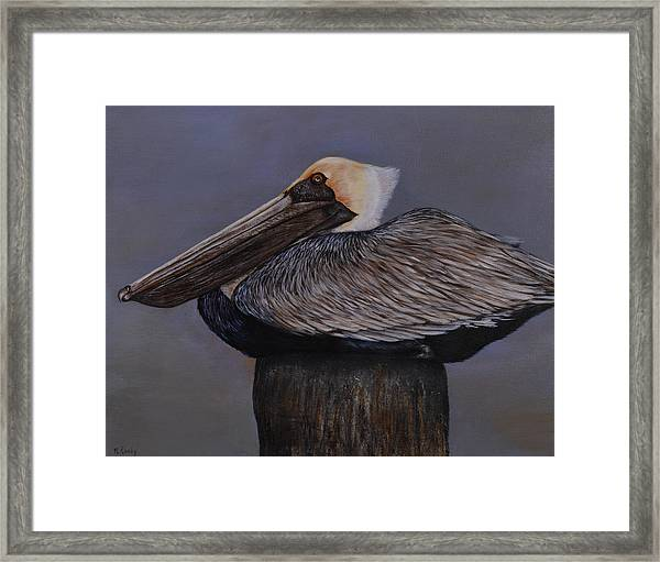 Pelican At The Pier Framed Print