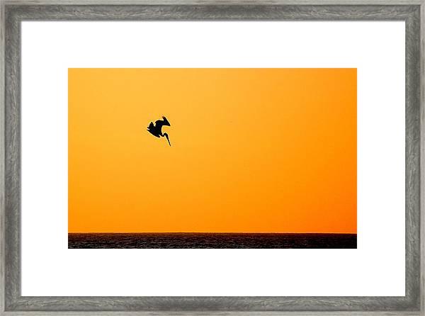 Pelican Diving At Sunset Framed Print