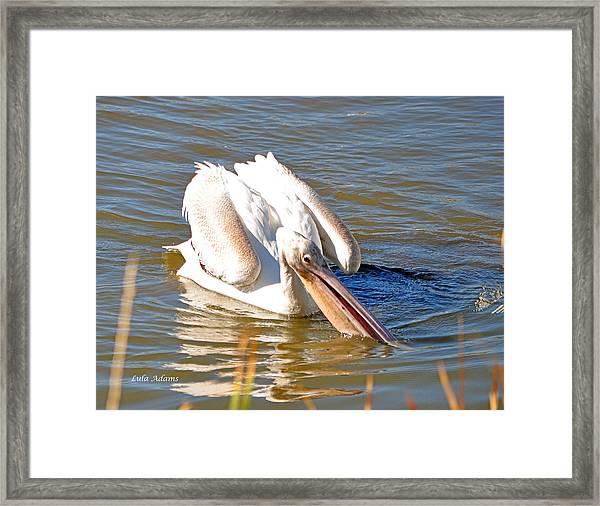 Pelican Fishing Framed Print