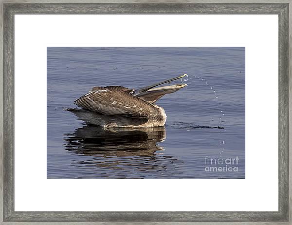 Pelican Fountain  Framed Print