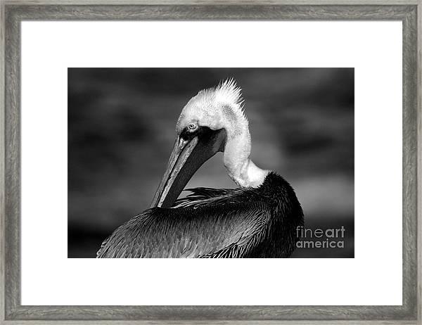 Pelican In Waves Framed Print