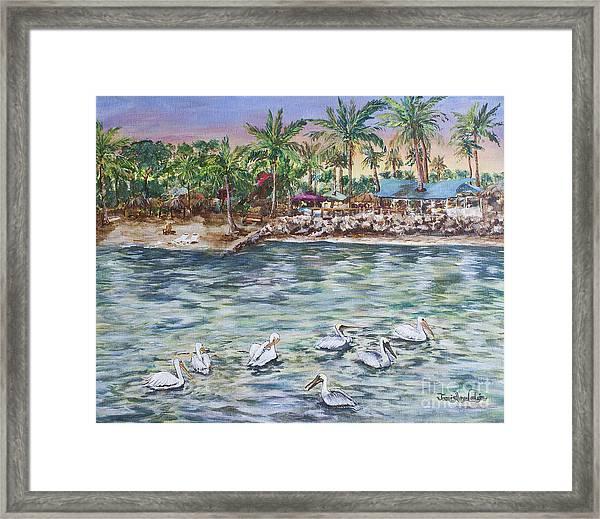 Pelican Medley Framed Print