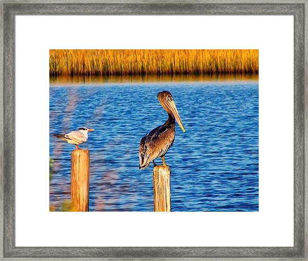 Pelican On A Pole Framed Print