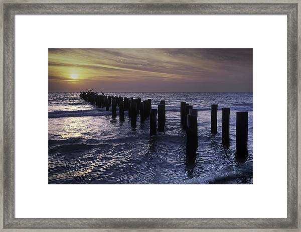 Pelican Pier Framed Print