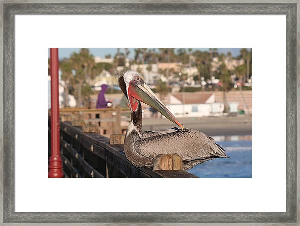 Pelican Sitting On Pier  Framed Print