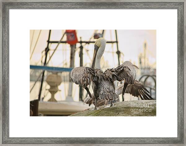 Pelican Strut Framed Print
