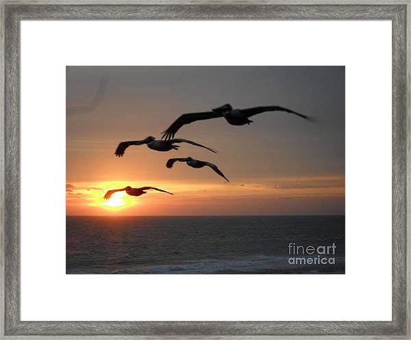 Pelican Sun Up Framed Print