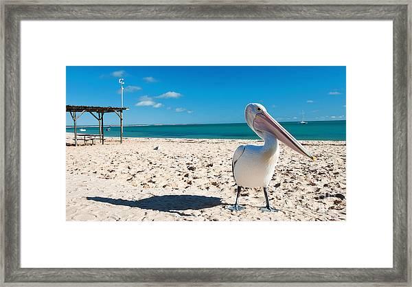 Pelican Under Blue Sky Framed Print