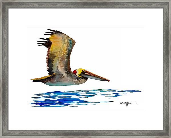 Da137 Pelican Over Water By Daniel Adams Framed Print
