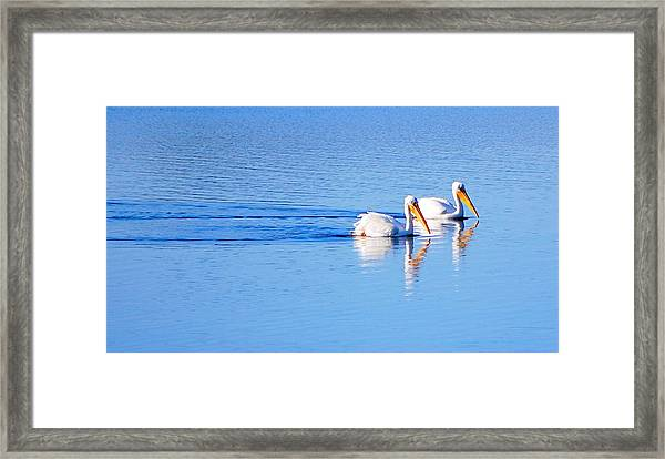 Pelicans On The Bay Framed Print