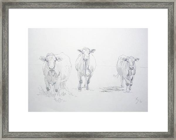 Pencil Drawing Of Three Cows Framed Print