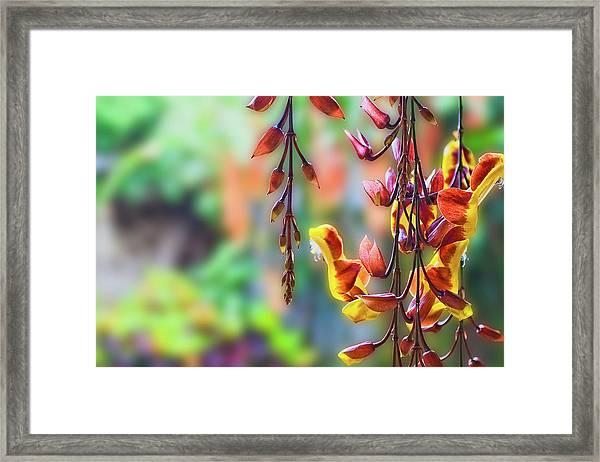 Pending Flowers Framed Print