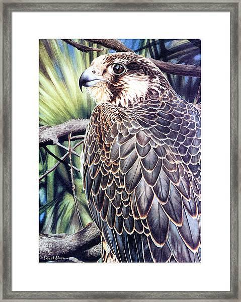 Da138 Peregrine Falcon By Daniel Adams Framed Print