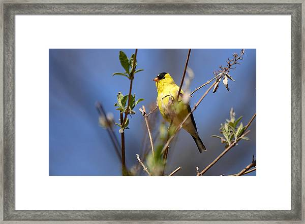 Perfect Shade Of Yellow Framed Print