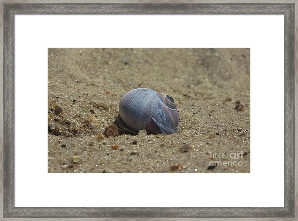 Perfect Shell Framed Print