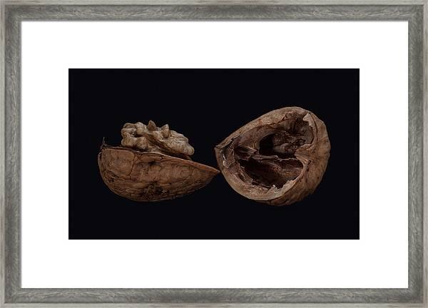 Perfect Walnut Framed Print