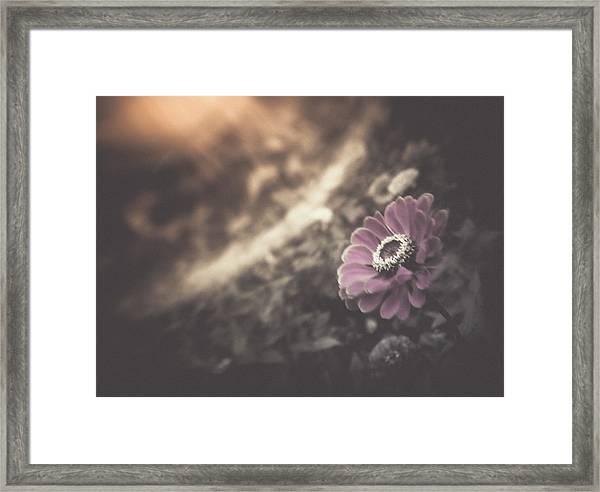 Perfumed Light Framed Print
